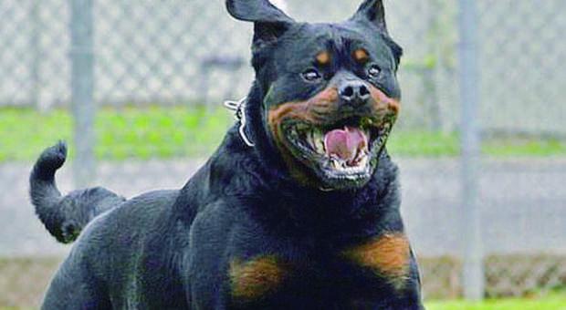 Cava de' Tirreni – tre fratelli arrestati e…attenti al cane
