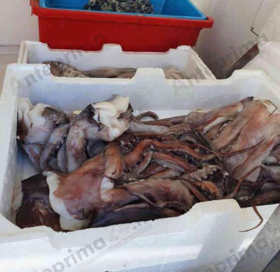 Prodotti ittici venduti senza etichettatura, ambulante sanzionato