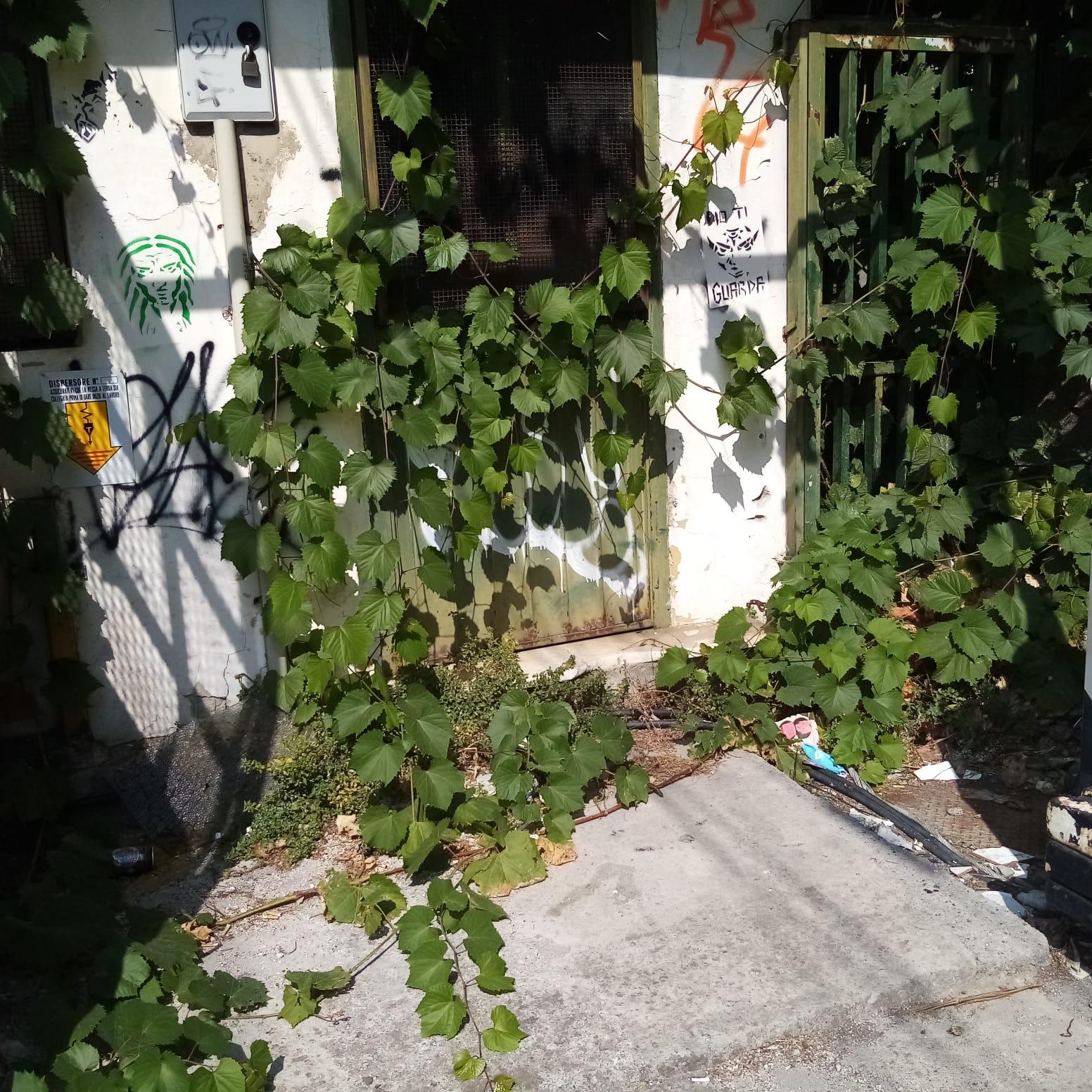 Nocera Inferiore: erba, di casa nostra…