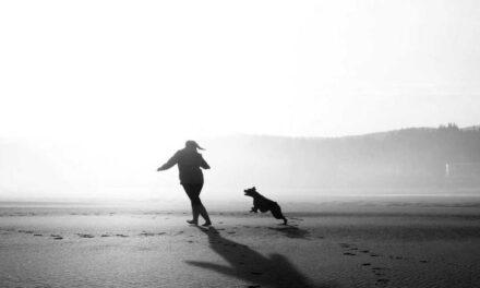 Nocera Inferiore: la tragica morte di un cane
