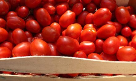 Pomodoro sequestrato: la Petti si difende