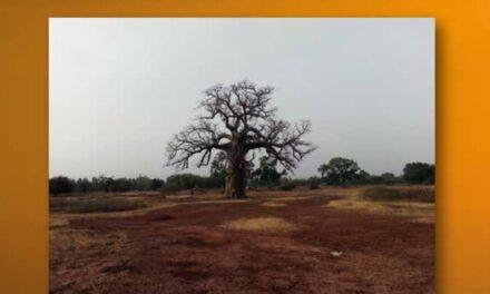 Graines de Joie, un nuovo libro racconto edito dalla nostra casa editrice Media Leader